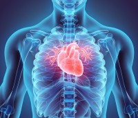 February is  marked as 'Heart Month' - a time to bring attention to the importance of cardiovascular health, and what we can to reduce our risk of cardiovascular disease.