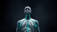 a rendering of a human torso with blue particles circulating throughout it