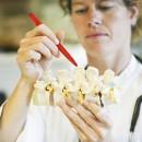 Cochrane Musculoskeletal establishes a Satellite Group in Denmark